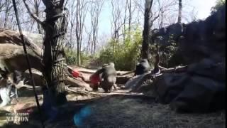 Веселые животные Compilation 2014 HD
