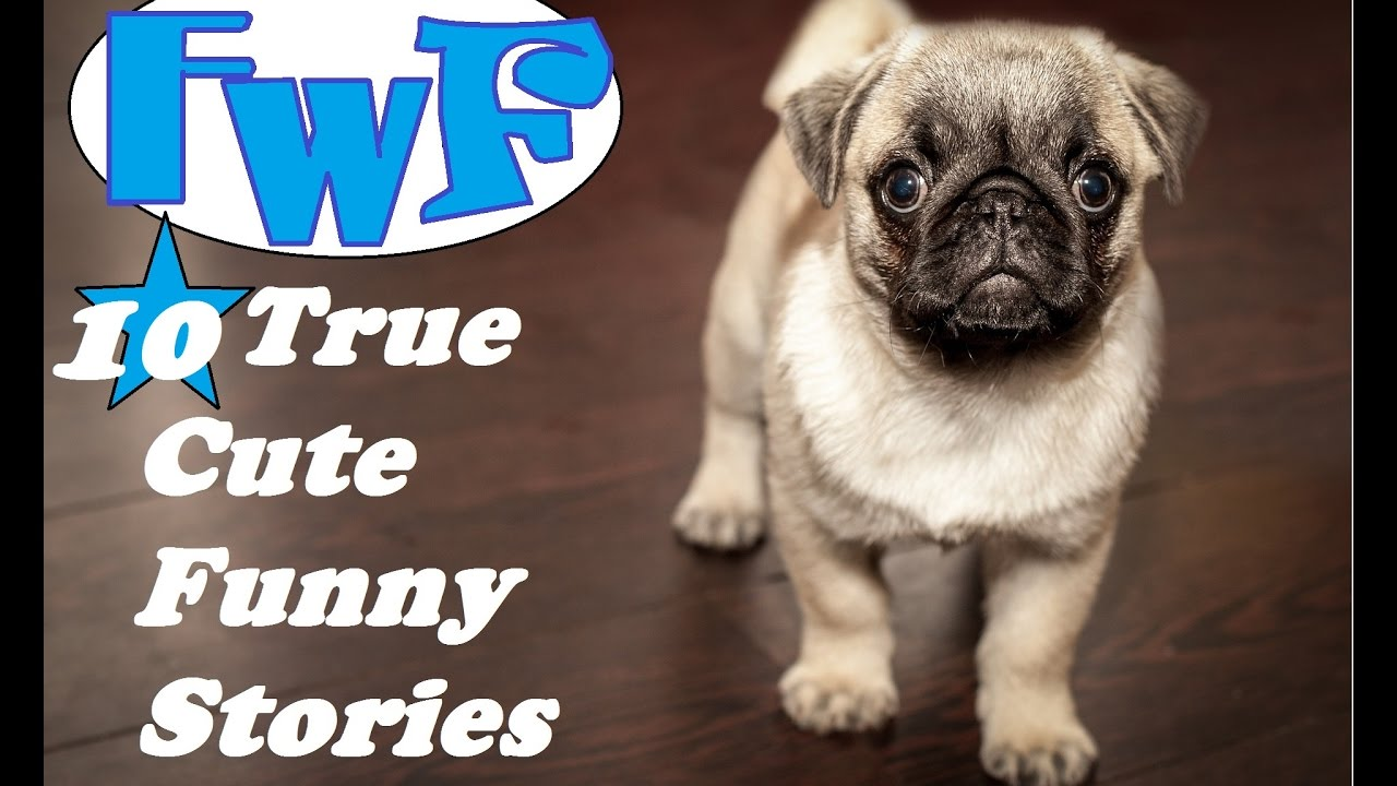 10 True And Cute Funny Stories Youtube
