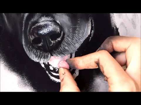 Timelapse | Pastel Drawing of Two Dogs