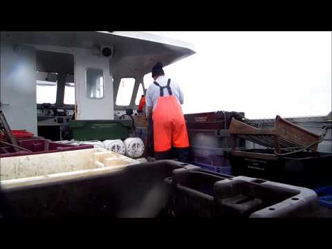 Whelk fishing in Wexford   *** Aurora  ***