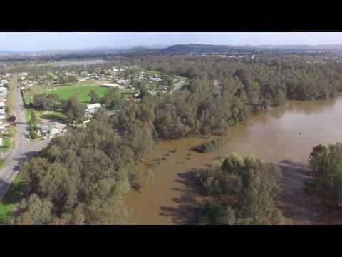 Wagga Wagga 2016 Flood - Wiradjuri Reserve - Black Swan