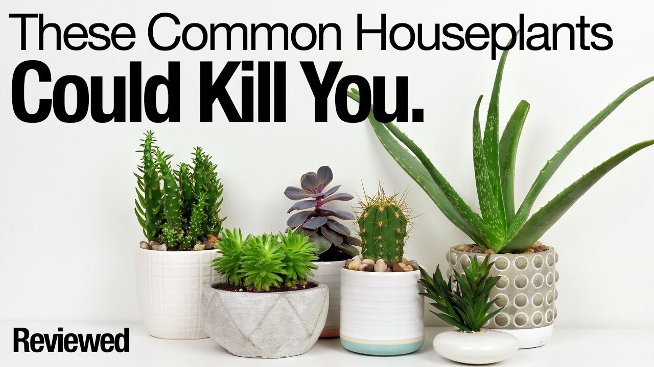 These Common Houseplants Could Kill You Youtube