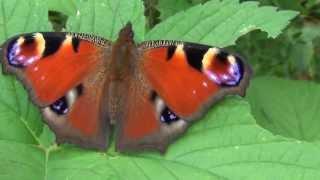 結ばれないだろう 蝶々達です