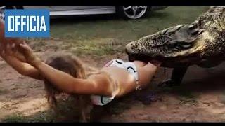 Самых Удивительных Диких Животных Нападает На Большие Атаки Крокодила   Самы