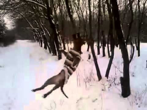 Pitbull Hangs From A Tree Branch Like A Swing Youtube