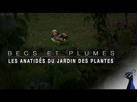 BECS ET PLUMES EPISODE 1: LES ANATIDÉS DU JARDIN DES PLANTES
