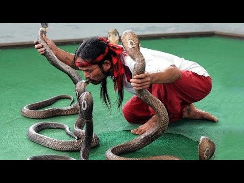 Cobra Snake 🐍 || Hindi Comedy || Discovery || Hollywood | Bollywood | Bhojpuri | Zee Tv | Zee Anmol