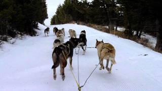 Mike And Jess' Dog Sledding Adventure