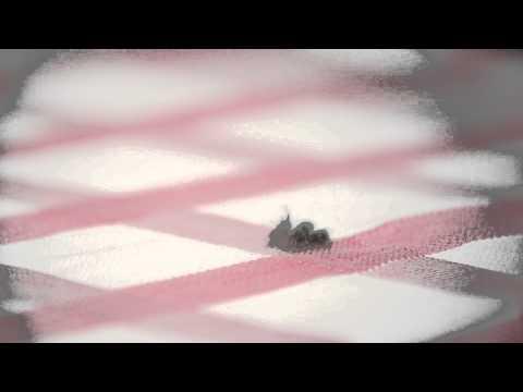 Watch:Flies Get Annihilated By Salt In Slow Motion