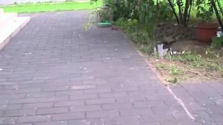 猫とイタチ_