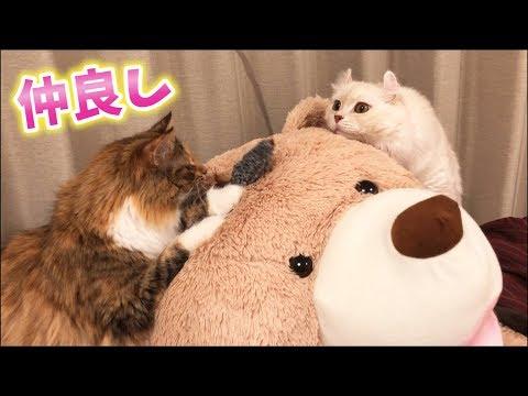クマを溺愛する猫達