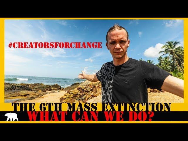 5 reasons 4 the 6th Mass Extinction | Why Charity Is Failing #creatorsforchange (ARCANE BEAR)