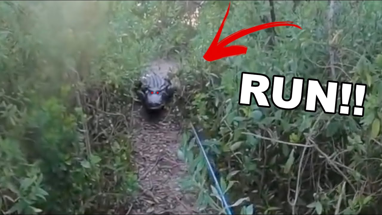 Chased By A Giant Alligator While Fishing
