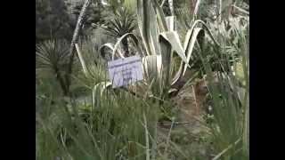 Абхазия   Сухум, Ботанический сад 8
