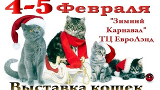 Выставка кошек 2017 г.Иваново Зимний карнавал  4-5 Февраля.