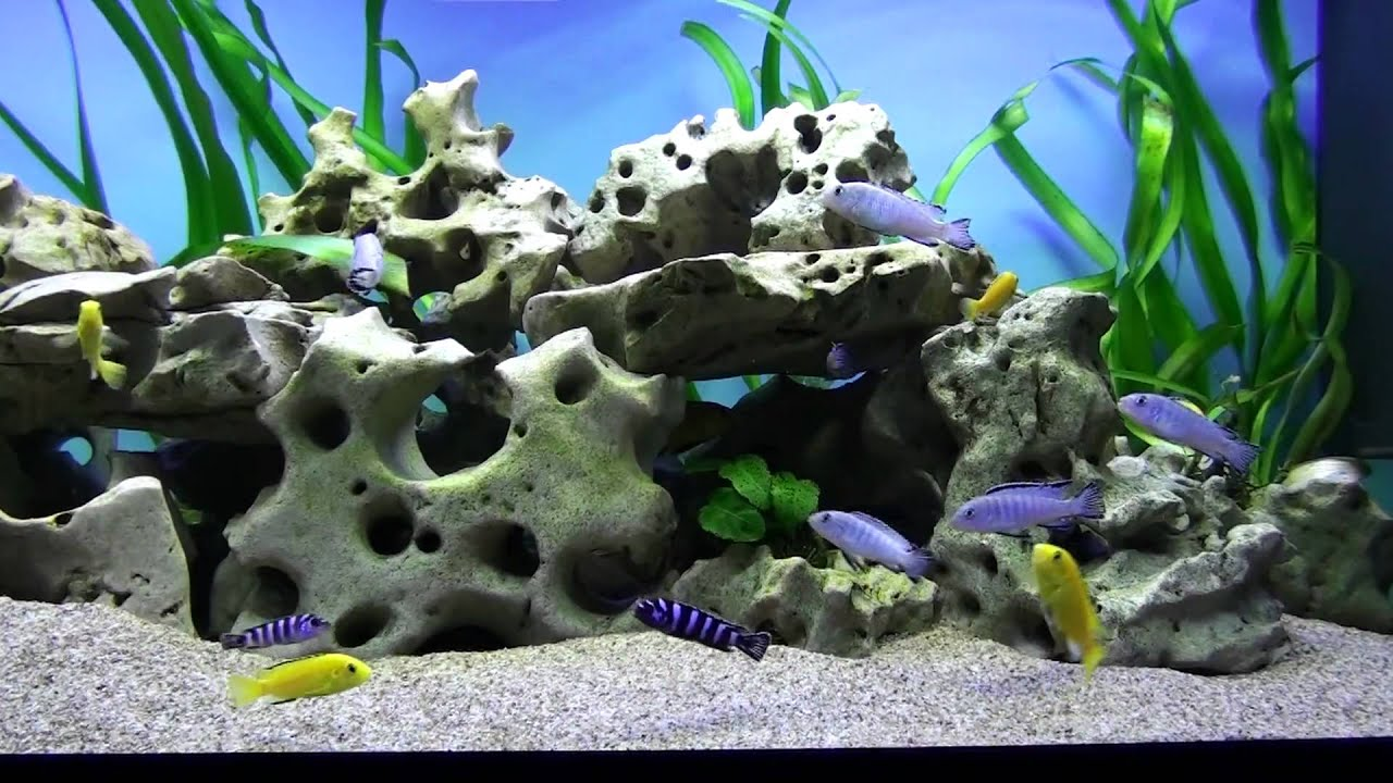 Aquarium screensaver fish tank 1080p hd - Fish Tank Full Hd 1080p