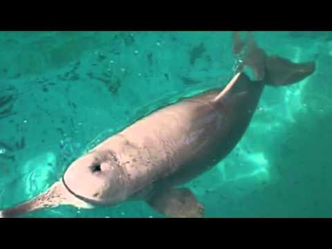 Baiji dolphin tribute
