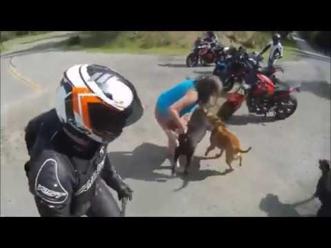pet dog vs a street dog