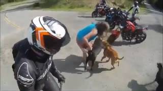 pet dog vs a street dog