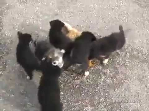 Puppies Attack Cat With Cuteness
