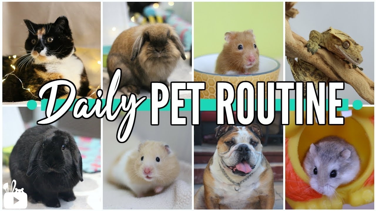 LIFE WITH 8 PETS! | Daily pet routine