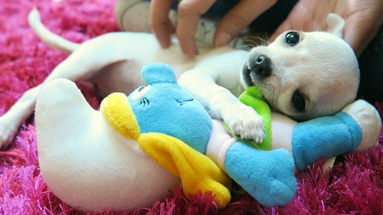 Una nuova amica in famiglia youtube for Immagini di cani da colorare