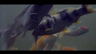 Ash Kidd - Aquarium