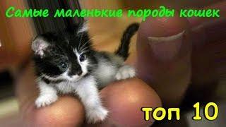 САМЫЕ МАЛЕНЬКИЕ ПОРОДЫ КОШЕК  ТОП 10  THE SMALLEST BREED OF CATS