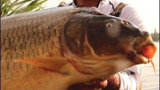 Риболовля на великих коропів і амурів 2018.Кубок удачі на марьевском водосховищі