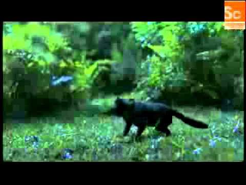 Mammals Vs Dinos Mammalian Sensory Development