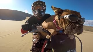 GoPro: Lexus The Dirt Bike Dog
