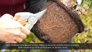 Sadzenie i sianie - informacje jak prawidłowo sadzić i siać