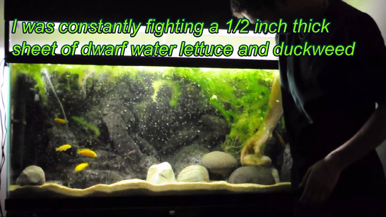 Creating Hiding Places for the African Cichlid Tank