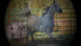 """""""Ibn Ben Malik""""  Straight Egyptian Stallion Thumbnail"""