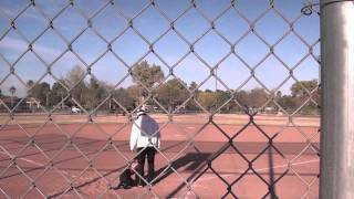 Retriever Training Lining Baseball Drills (part 1)