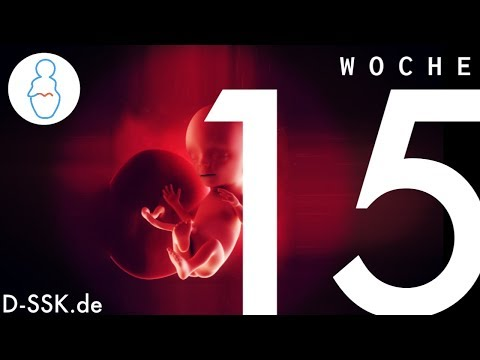 15. SSW / 15. Schwangerschaftswoche ✪ D-SSK.de