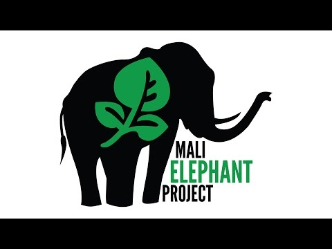 Stop Elephant Poaching | Loveanimals.org Campaign