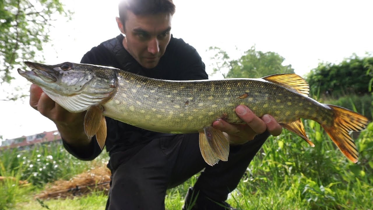 Northern Pike and Perch Canal Fishing The Netherlands ...