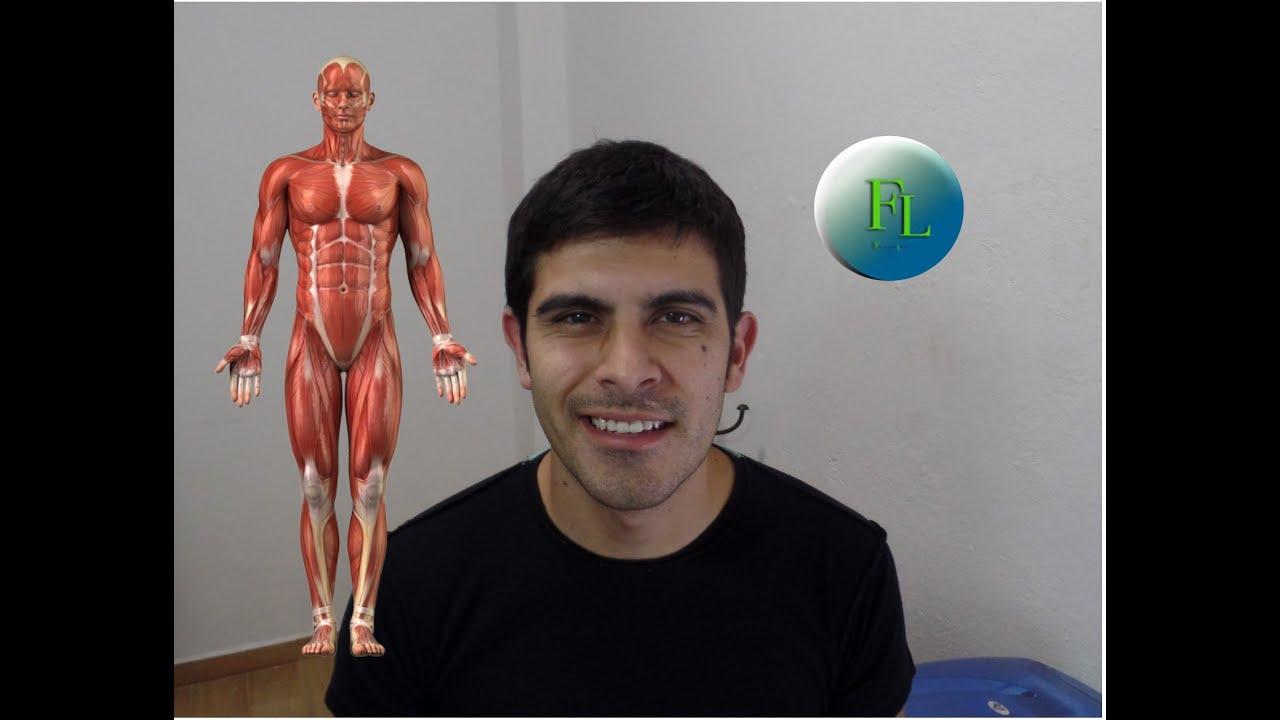 Como estudiar los músculos del cuerpo? - YouTube