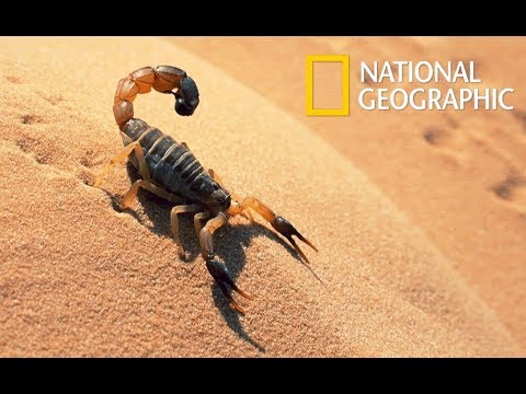 Wild Arabia - Hidden Deep in the Desert | Wonders of the Wildlife (Nat Geo Wild)