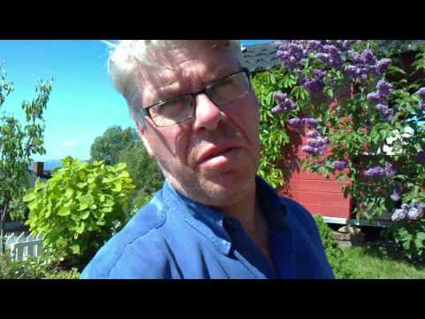 Testvideo direkte opplastet fra Vivaz Pro