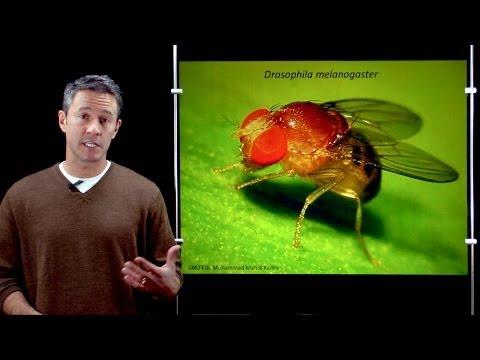 Online Developmental Biology: Introduction to Drosophila