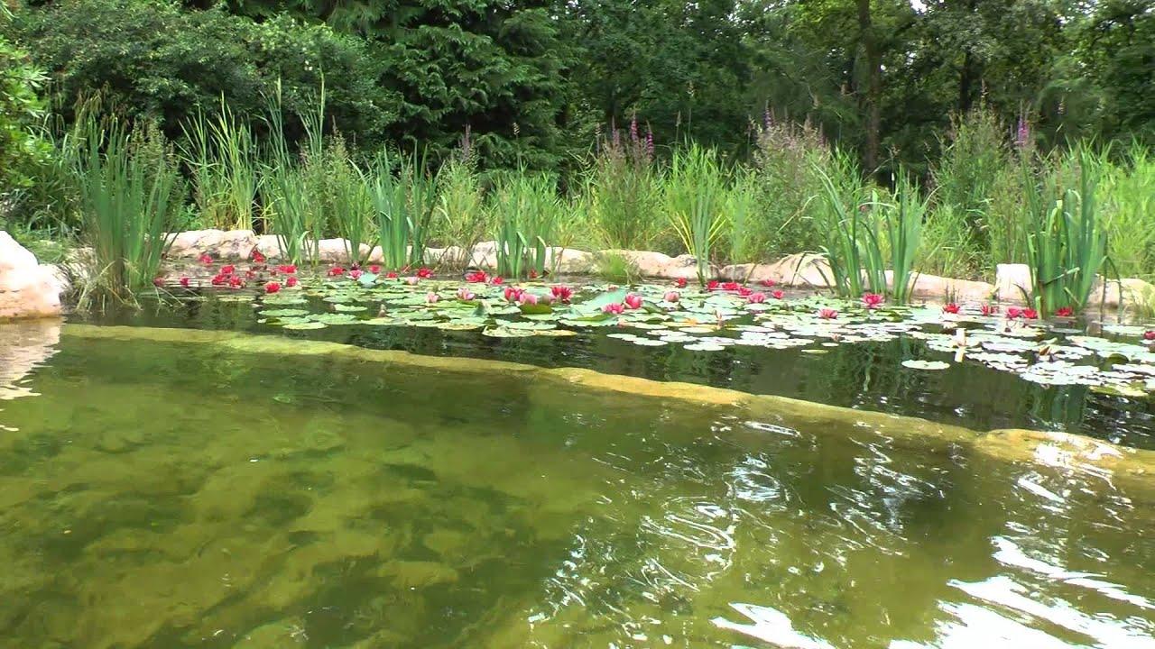 Bassin bio en b ton 2 me saison apr s mise en eau youtube for Bassin biologique