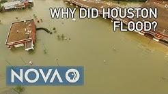 Why Did Houston Flood?