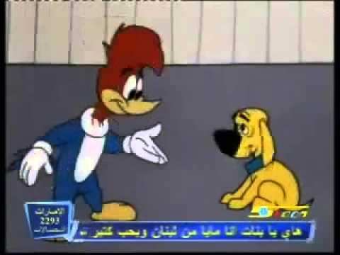 نقار الخشب الجزائري أزها يا الزوالي