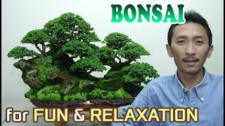 Bonsai Tree for Fun & Relaxation by Tedy Boy of Indonesia