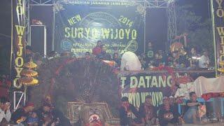 New Suryo Wijoyo Full Kepang Celeng
