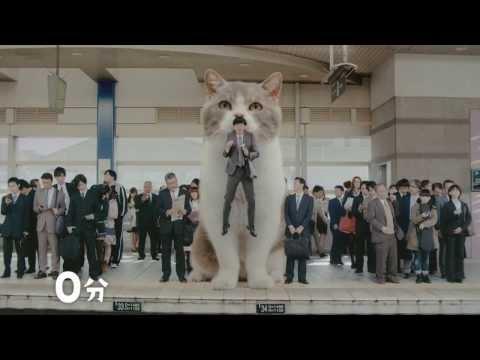 Japanese Cat Commercial CM