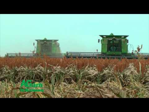 Farm Factor - Martin Kerschen and the Sorghum Checkoff - September 27, 2016