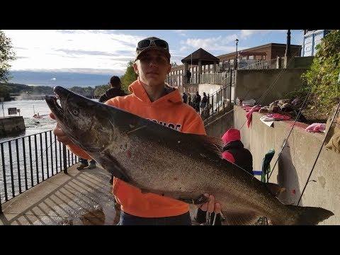 Salmon River Oswego NY EPIC SALMON RUN: BIG KING SALMON!!!